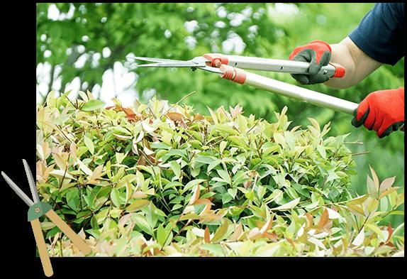 剪定、庭づくりなら手塚造園へ