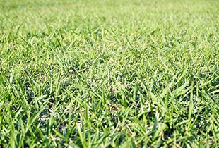 芝の手入れ